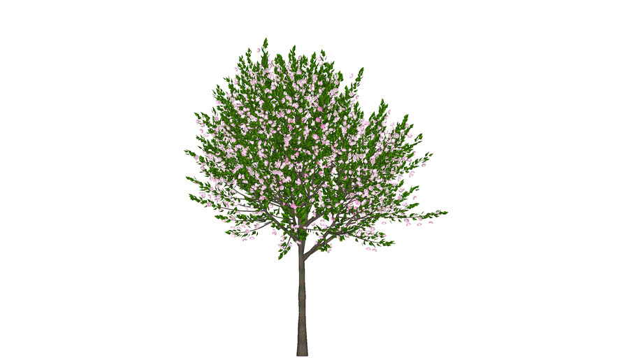 Flowering Cherry Tree Fabricated 3d 3d Warehouse