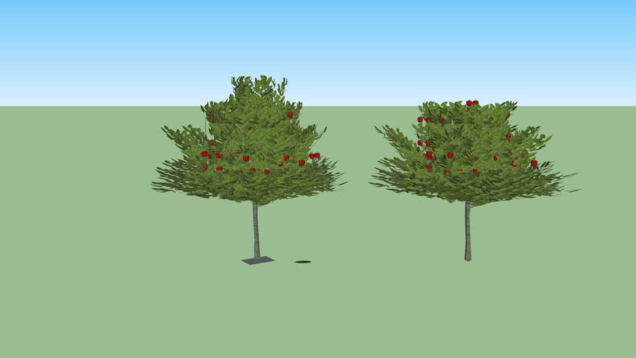 Apple tree 3d