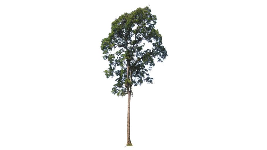 Dynamic growing large tree