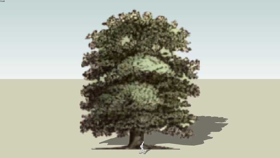 Tree_Elm_Ulmus campestris  (Pixel)