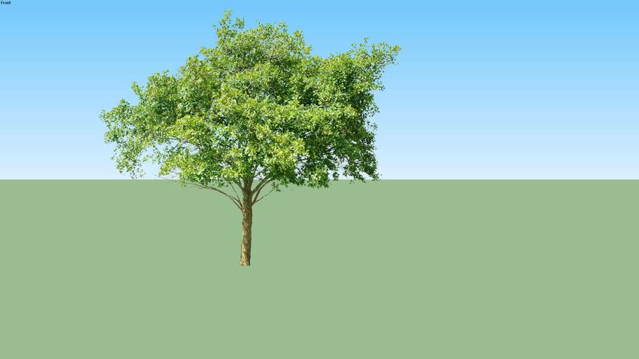 Árvore VIII (PNG)