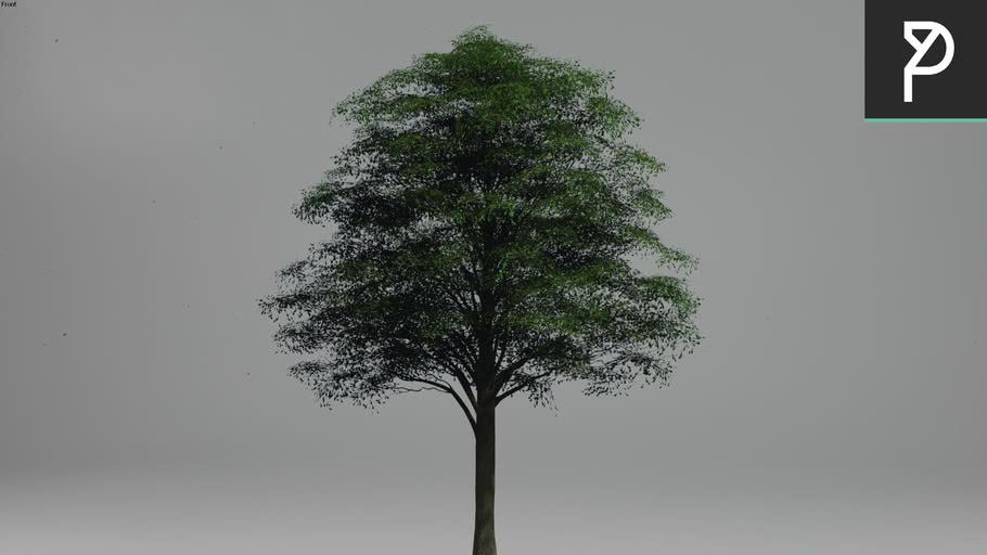 2DTrees_016   Leaf Medium