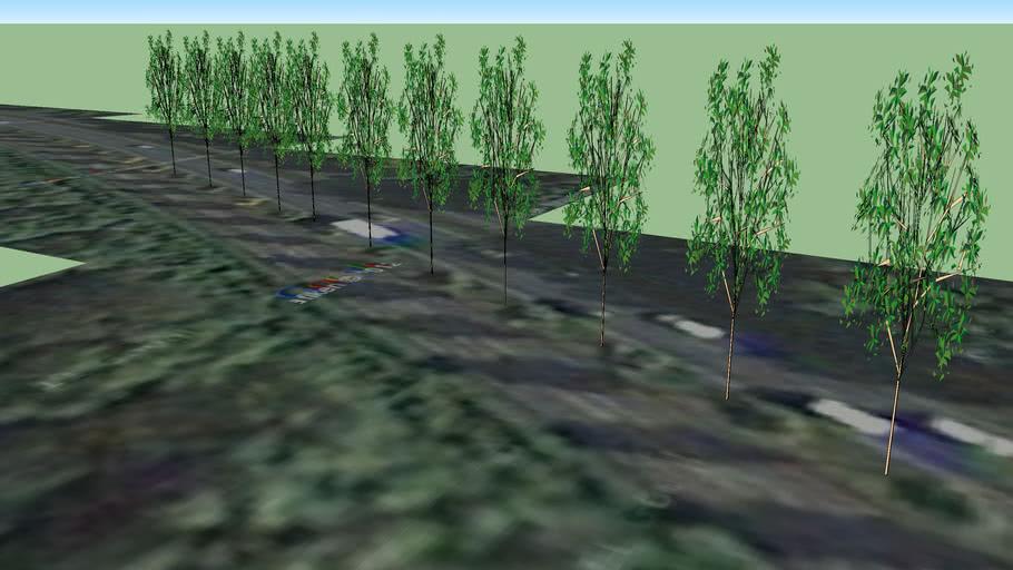 Baumreihe an der Schnellstraße Jena