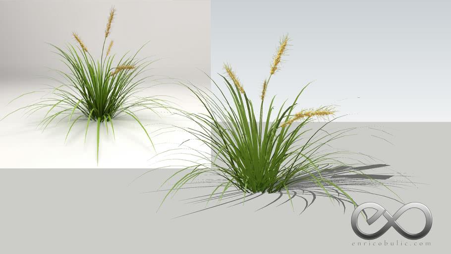 "Lomandra Hystrix ""Basket Grass"""