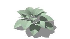 Krzewy liściasta