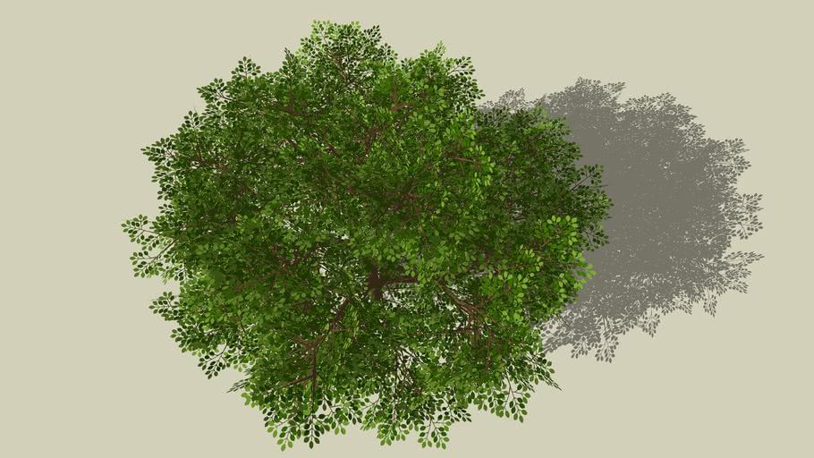 Árvore VI