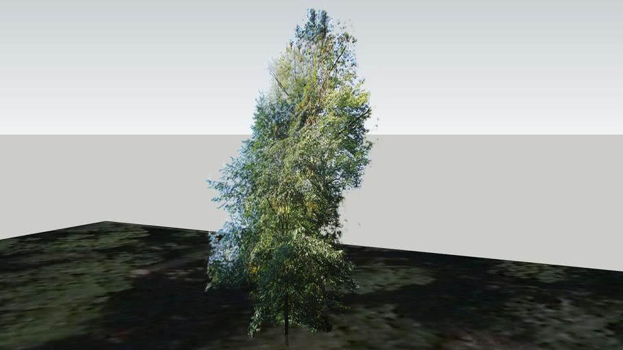 Zamok Veselí nad Moravou - Strom 154