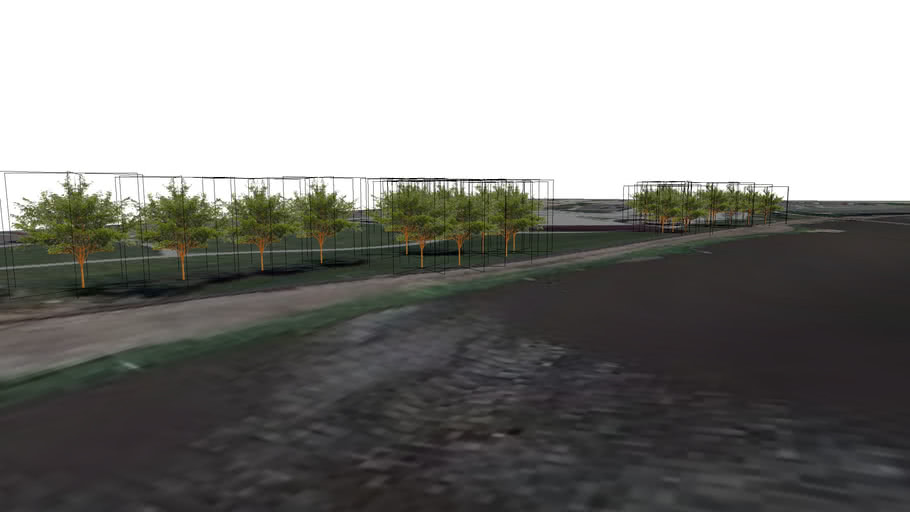 Downtown River Greenway Project (Phase I) Trees