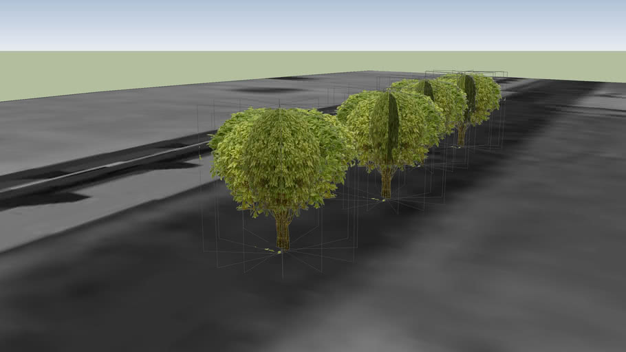 small trees in  bbsbpc 1
