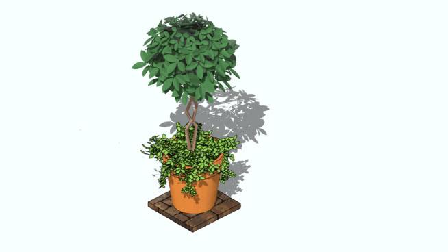 plantas en pote