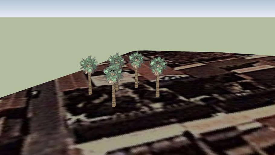 PALMERAS DE LA IGLESIA SAN LAZARO