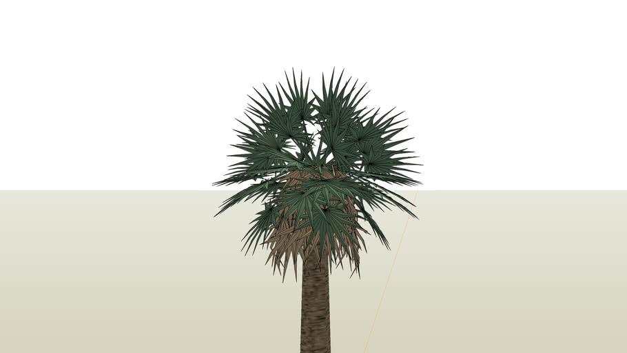 Palmeira Tropical Leque
