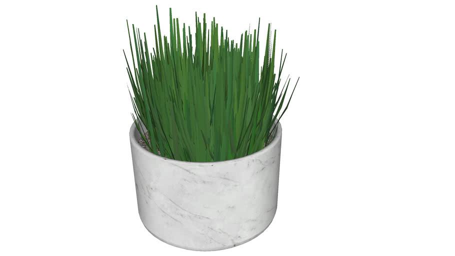 Pot Grass