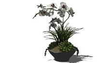 plantas decor