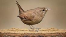 Vogels - Oiseaux - Birds - Pájeros - Vögel