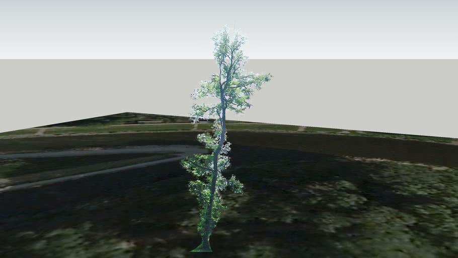 Zamok Veselí nad Moravou - Strom 69