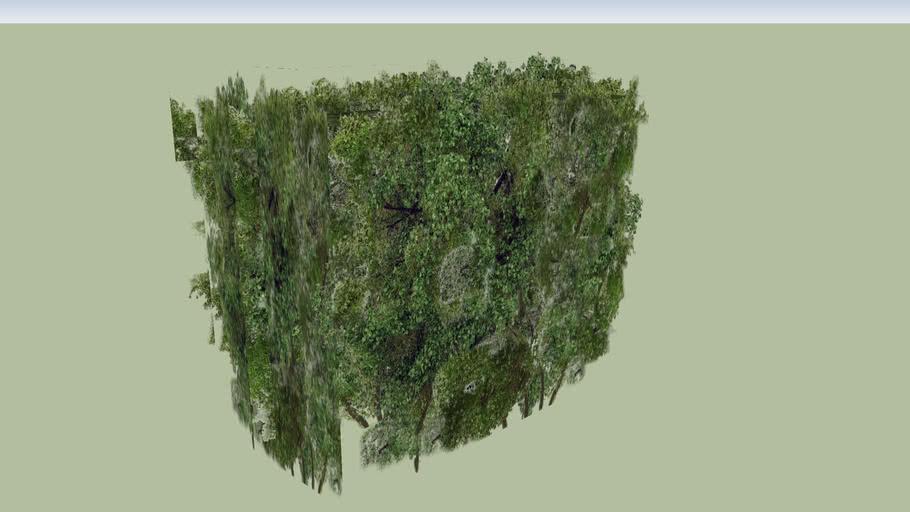 Hedge / Shrub