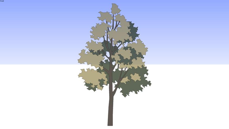 10米黄色树