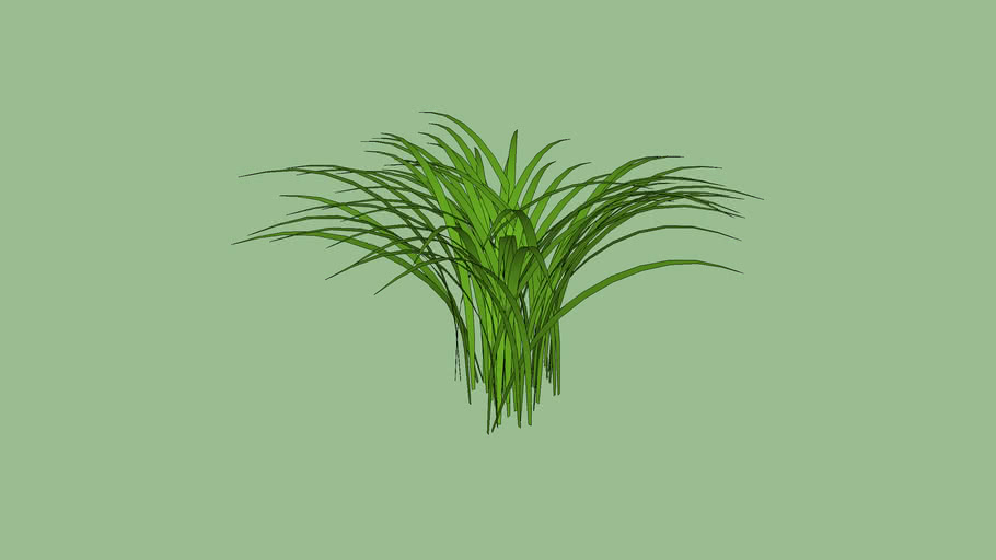 unique grass