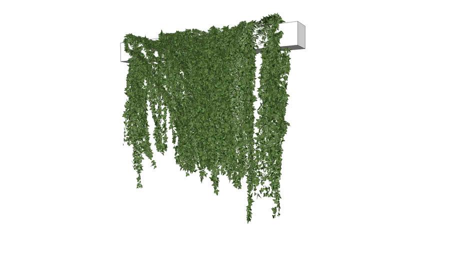 Plant_Ivy-Hanging