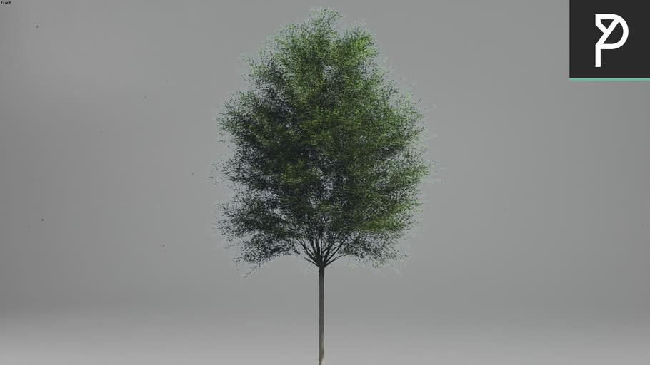 2DTrees_044 | Leaf Medium