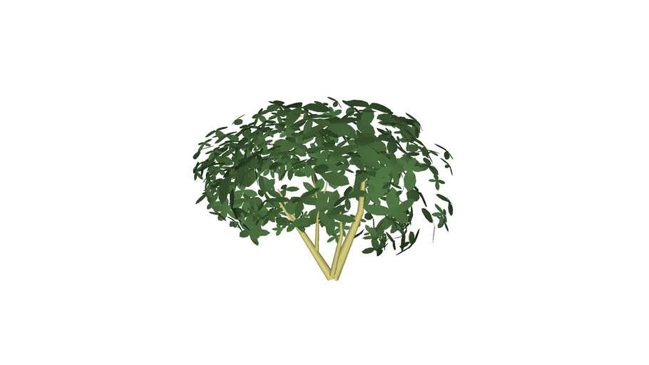 Small bush or hedge 3D