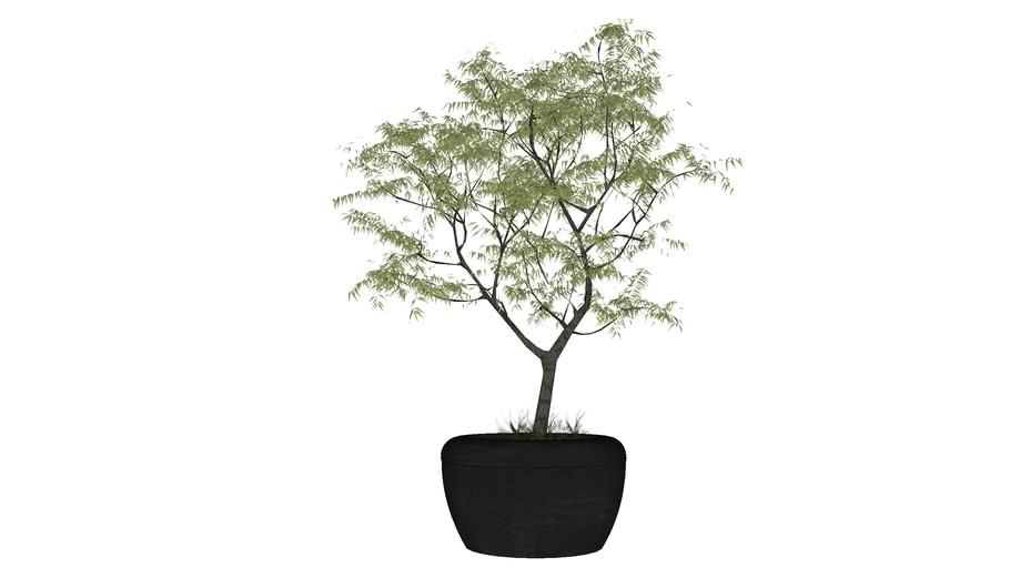 Marshalls Bellitalia Giove Large Precious Stone Tree Planter