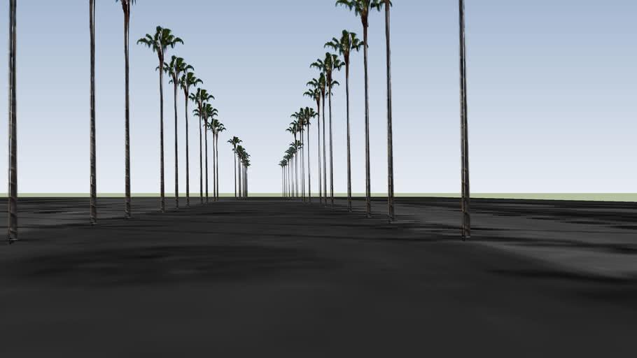 Palm Beach Island trees