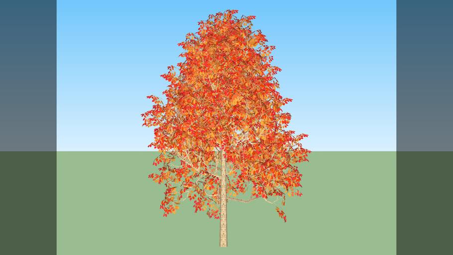 generic tree fall