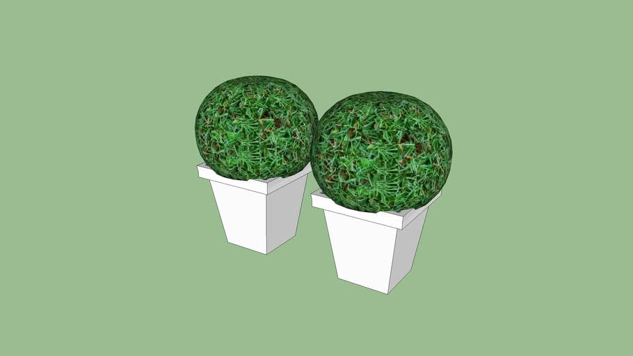 topiaria, topiary, vaso, vase