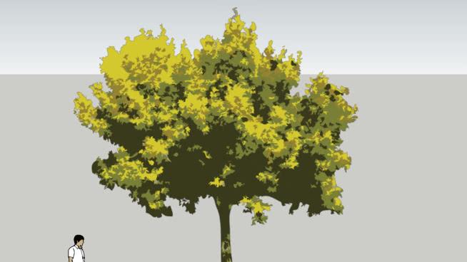 景觀-2D樹