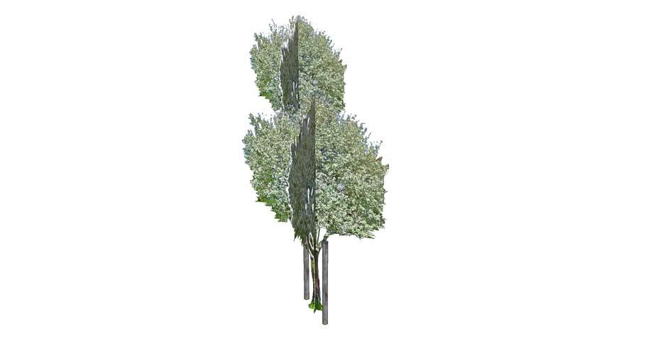 miramarparken_trees_north