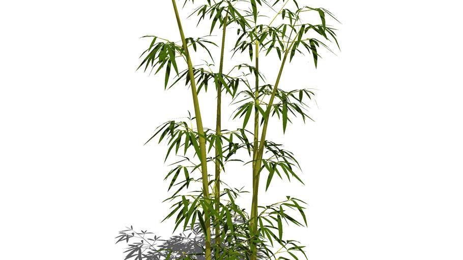 Bambou Bamboo 3D