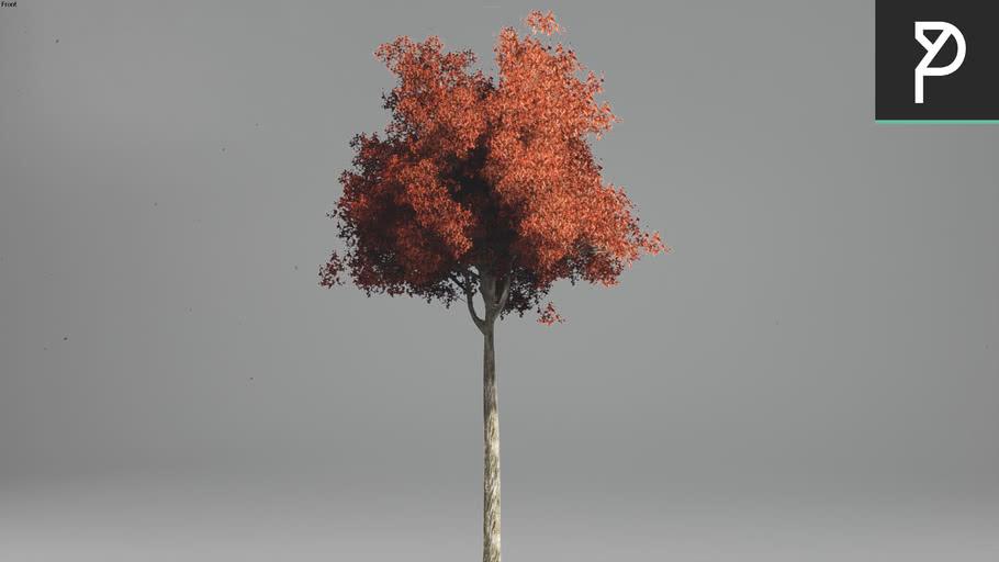 2DTrees_019 | Leaf Medium