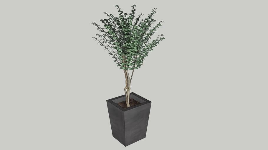 Vegetation 11