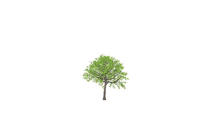 Artificial Elm Tree -3D
