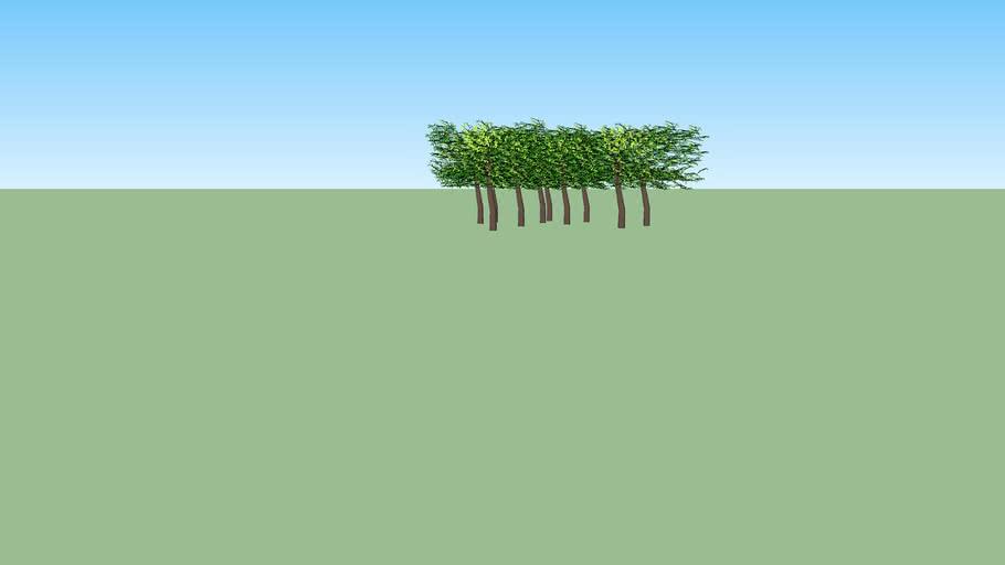 urbanism trees