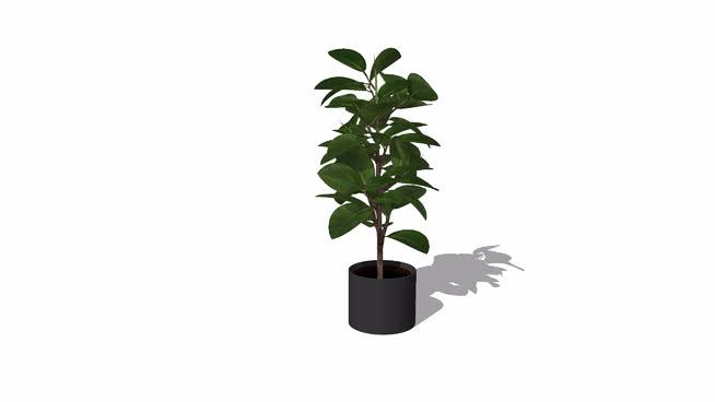 3D indoor plants