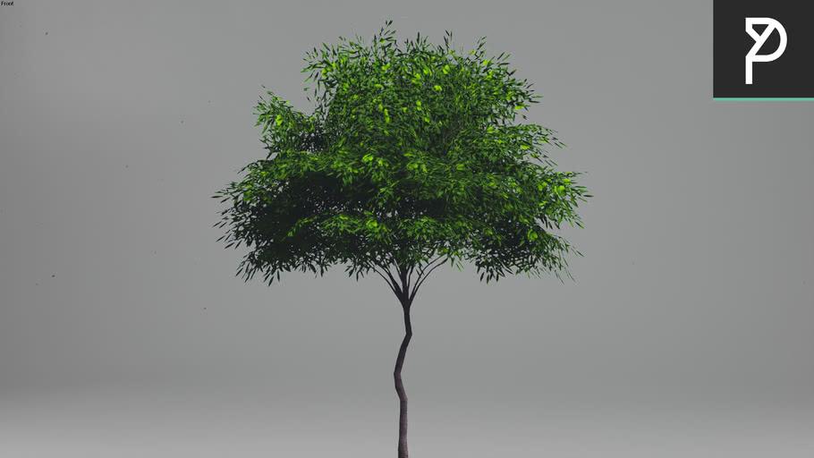 2DTrees_054 | Leaf Medium