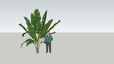 Plants & Greens