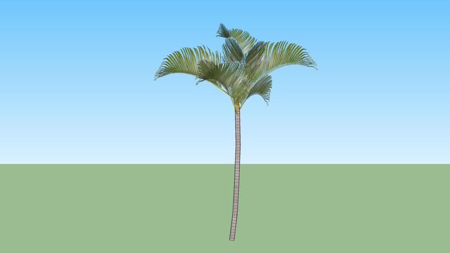 Palmeira 10