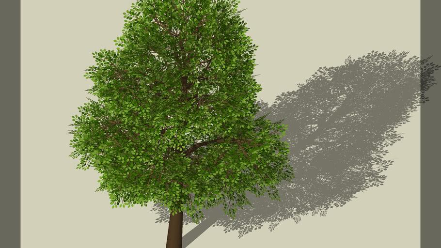 arbol pino acantilado