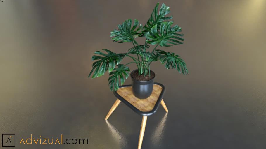 planta 12