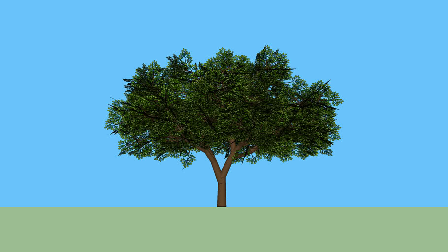 Árvore 22