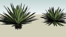 Plants Mexico