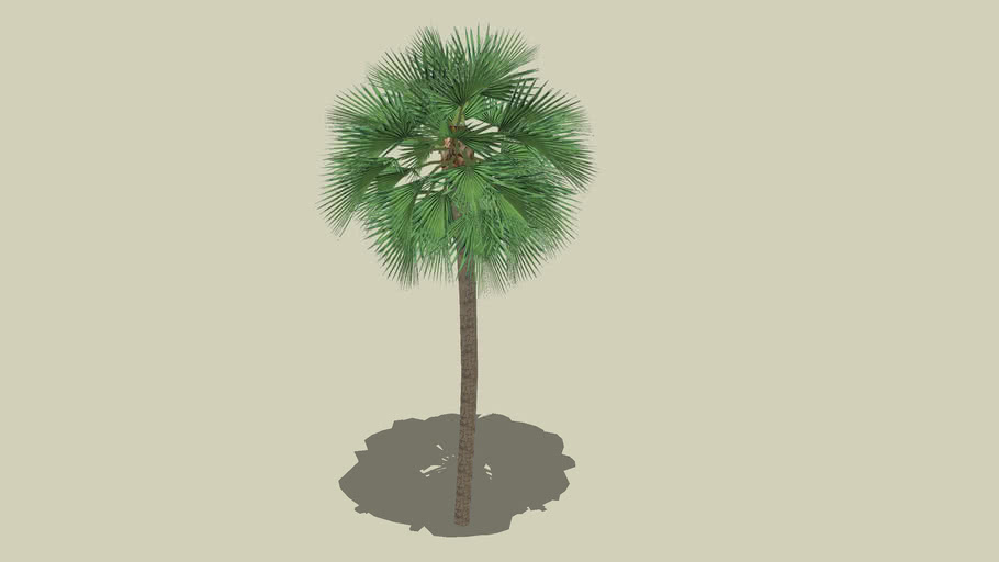 palm tree 003