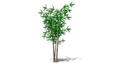 Pohon 1
