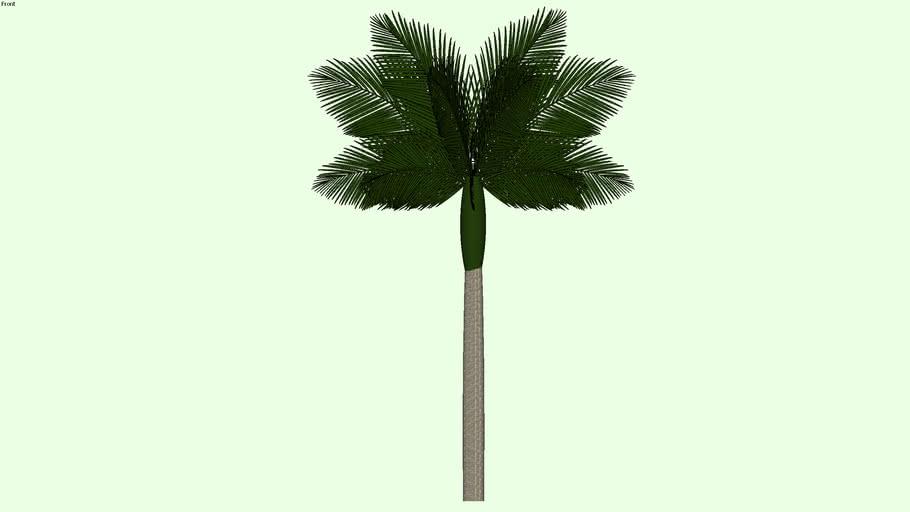 Palmeira / Palmtree