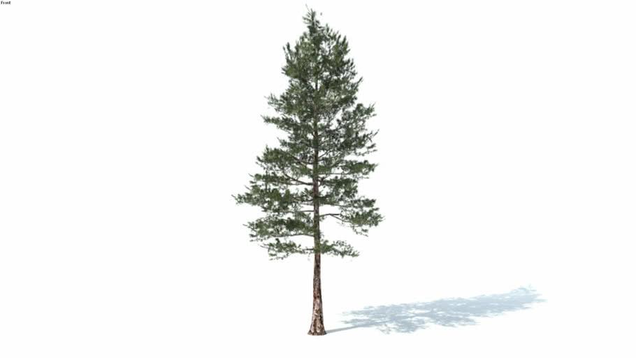 Low poly 3d tree (006)