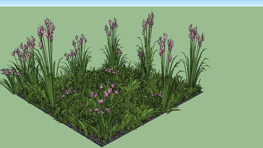 Grama y Flores 2